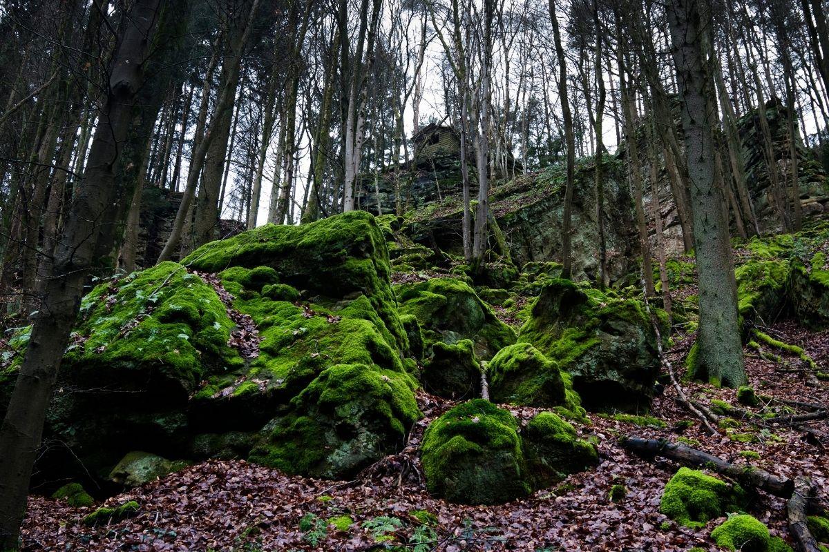 Doen in Luxemburg: wandelen door natuurgebied Mullerthal