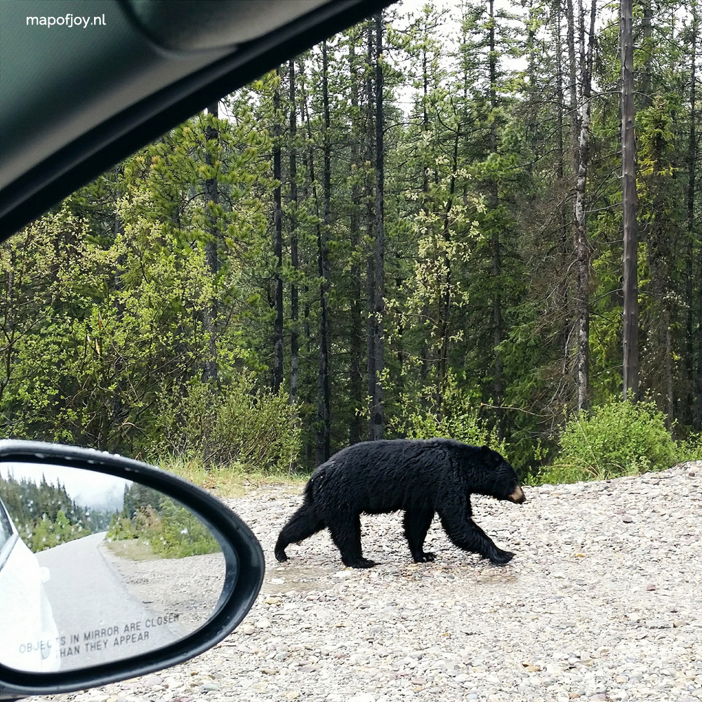 Black bear from car in Maligne, Alberta, Canada - Map of Joy