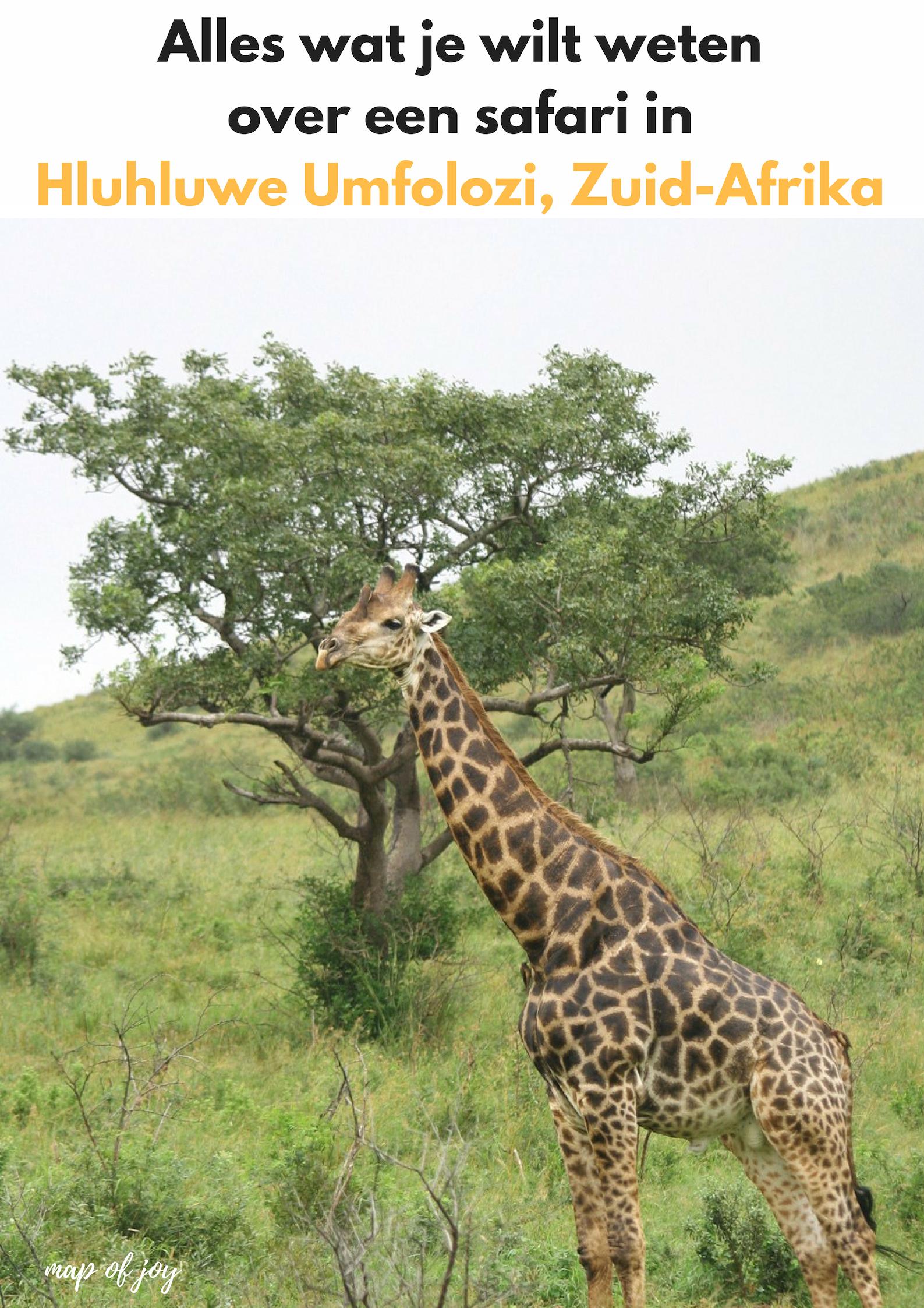 Alles wat je wilt weten over een safari Hluhluwe Umfolozi, Zuid-Afrika - Map of Joy