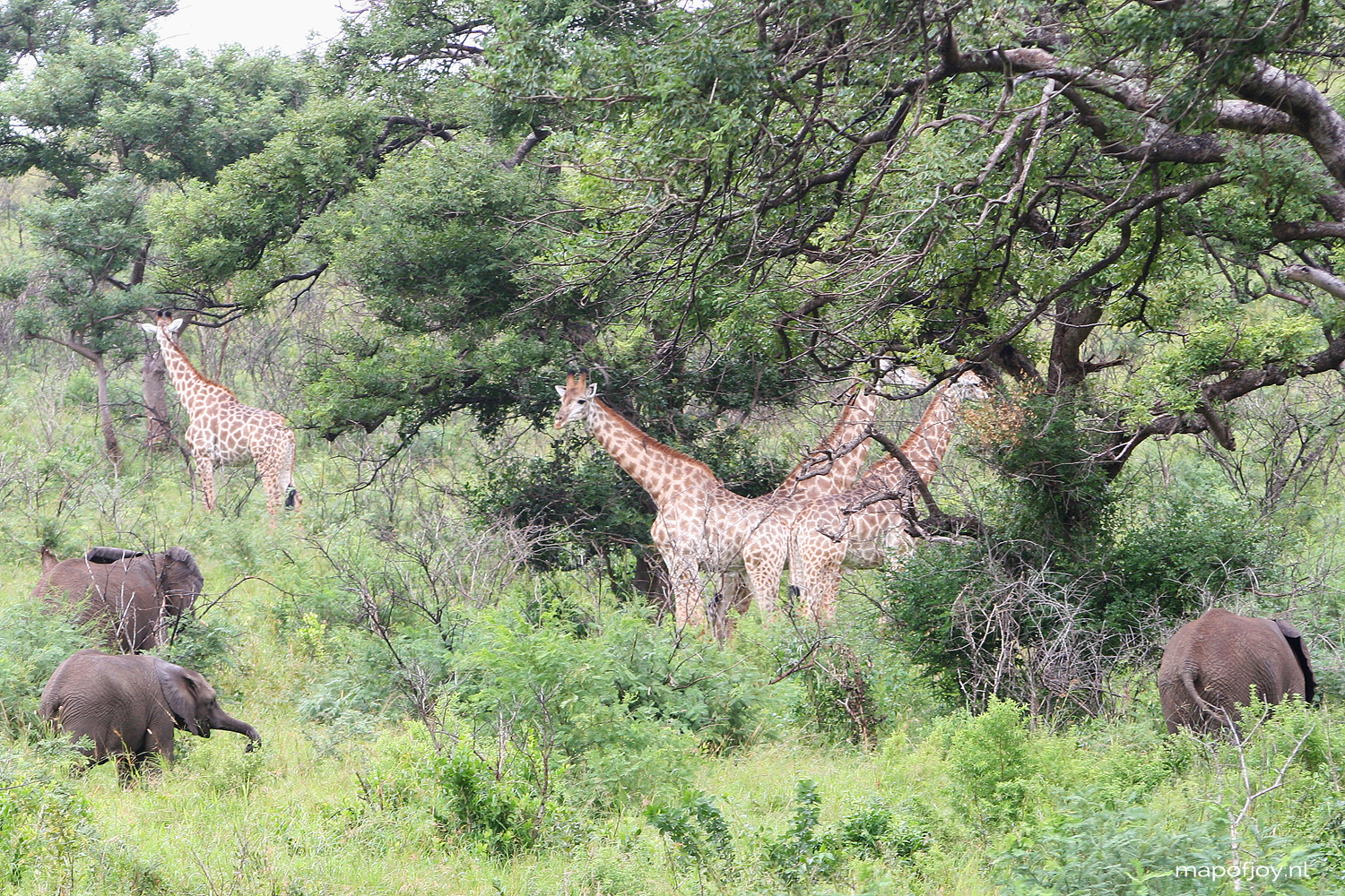 Safari Hluhluwe Umfolozi, South-Africa, travel, elephant, giraffe - Map of Joy