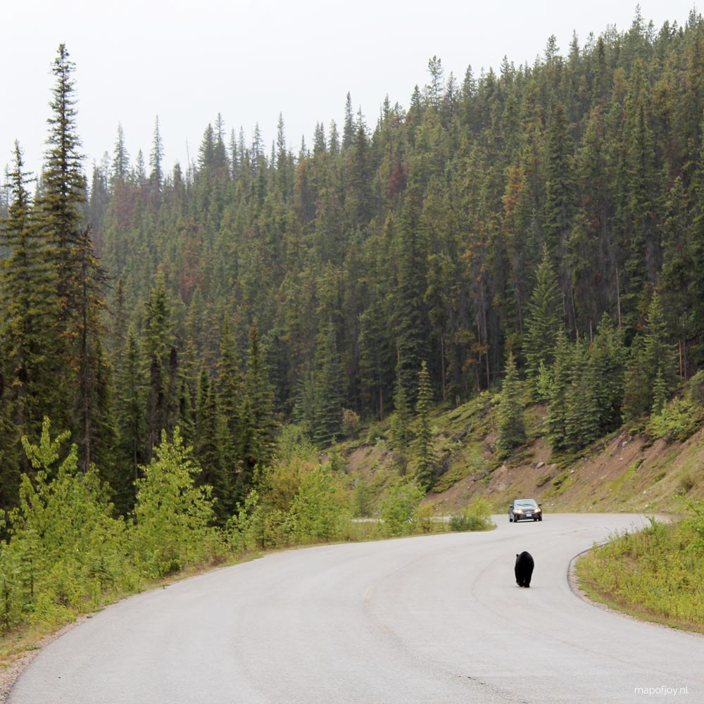 Maligne Lake road, bear, Alberta, Canada - Map of Joy