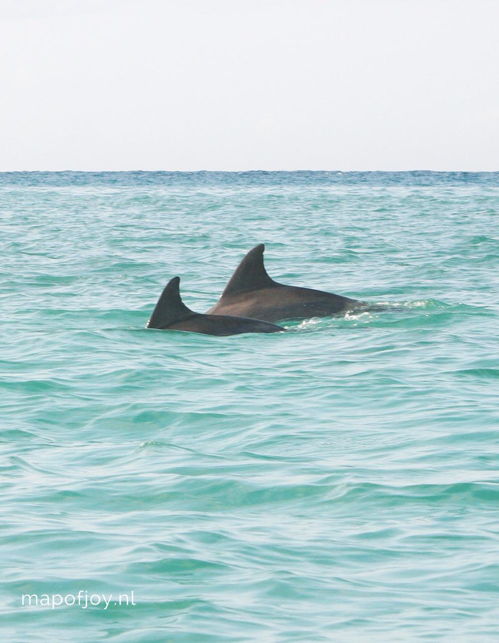 Doen vanuit Albufeira: dolfijnen spotten - Map of Joy