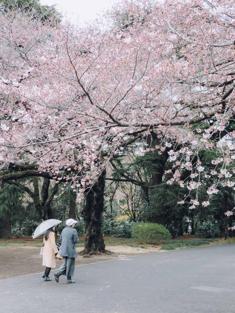 beste plekken in Tokio om kersenbloesems te zien - Map of Joy