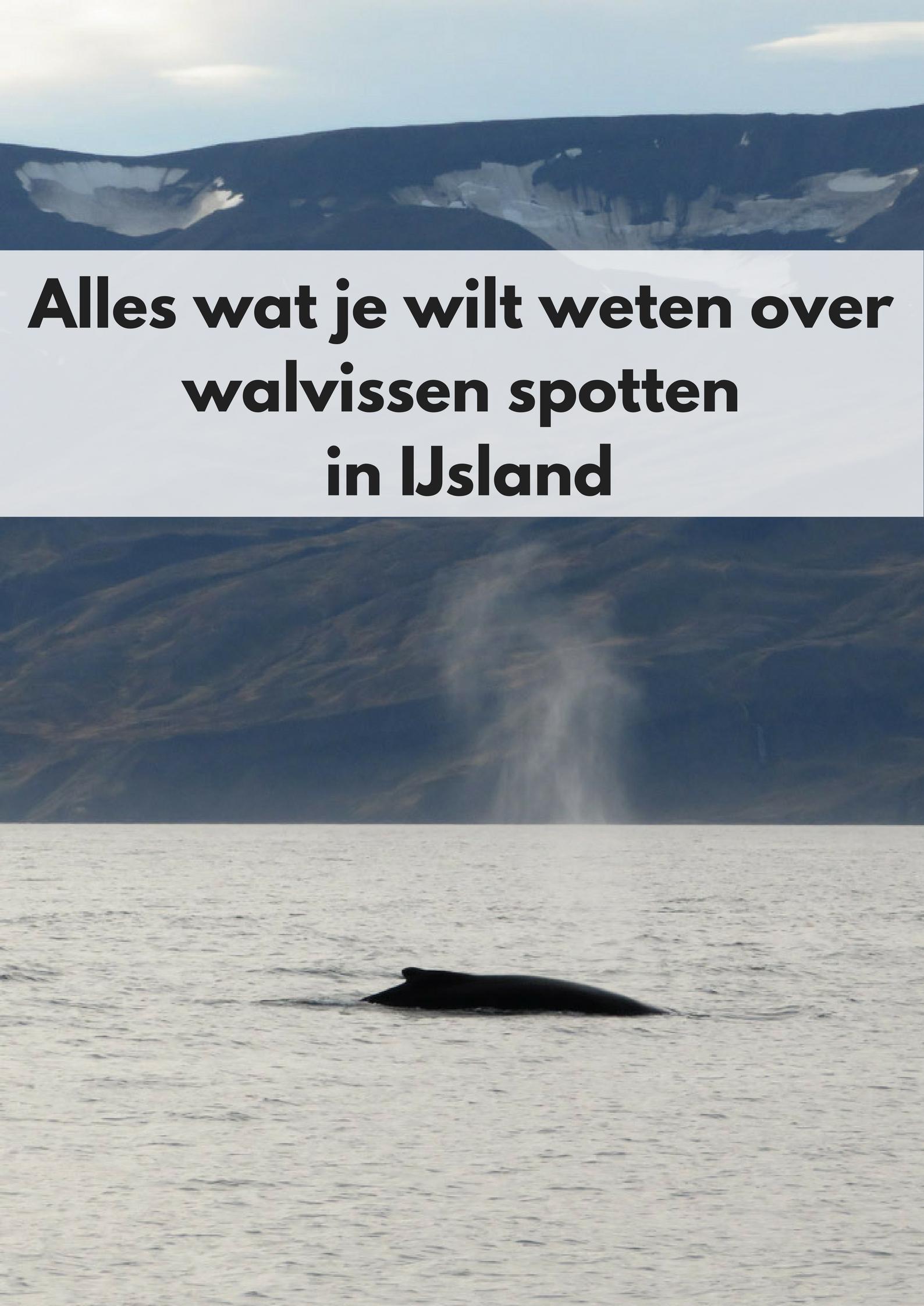Alles wat je wilt weten over walvissen spotten in Húsavik, IJsland - Map of Joy