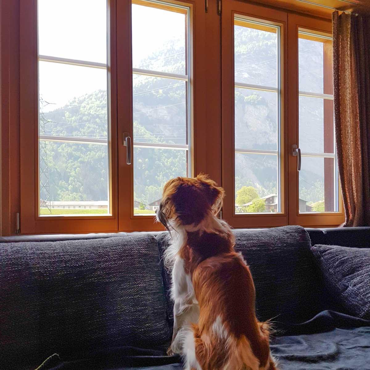 vakantiehuis Zwitserland met hond - Map of Joy