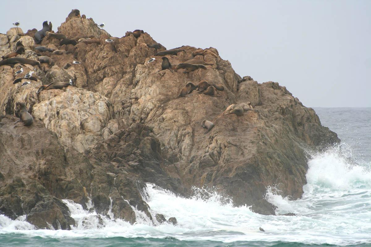 5x bijzondere bezienswaardigheden langs de Highway 1, zee otter in Monterey , zeehonden en zeeleeuwen