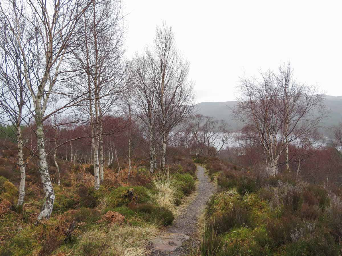 De leukste dingen om te doen in en rond Inverness, Glen Affric- Map of Joy