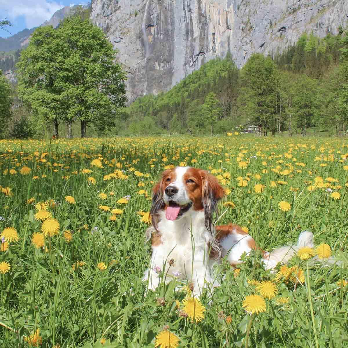 Vakantietips Lauterbrunnen [droombestemming in Zwitserland] - Map of Joy
