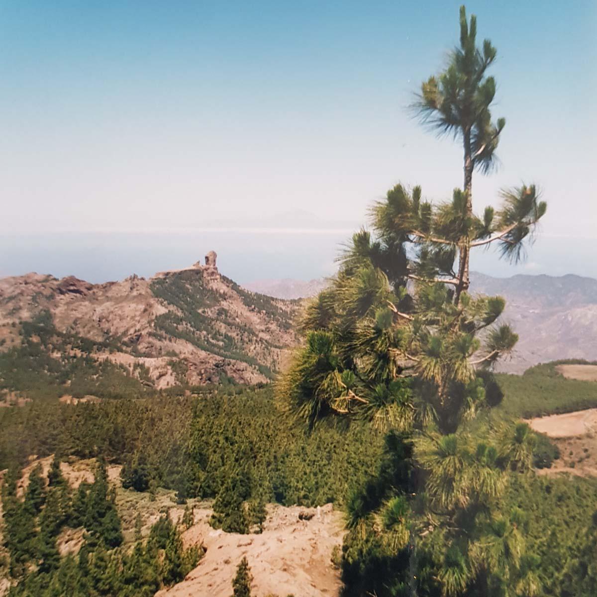 Welk eiland van de Canarische eilanden moet je kiezen [+ te doen tips]