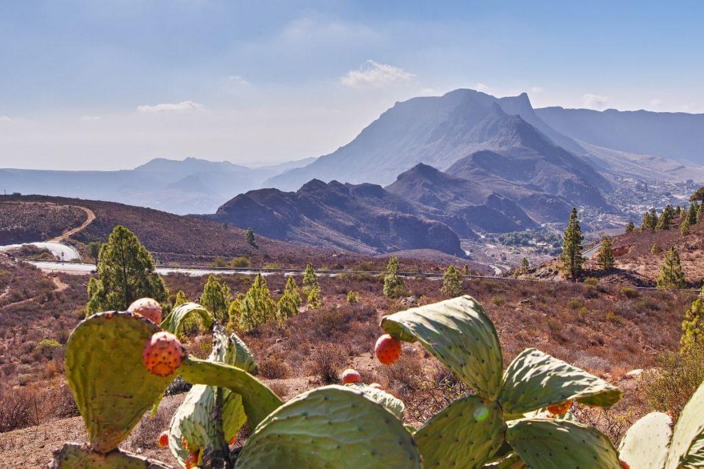 landen code geel Gran Canaria