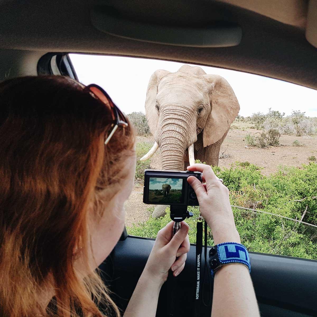 Zelf met een auto door Addo Elephant Park rijden - Map of Joy