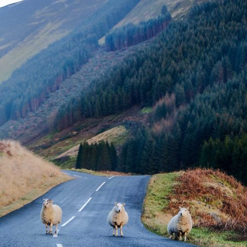 De mooiste bezienswaardigheden in Zuid-Schotland [roadtrip route]