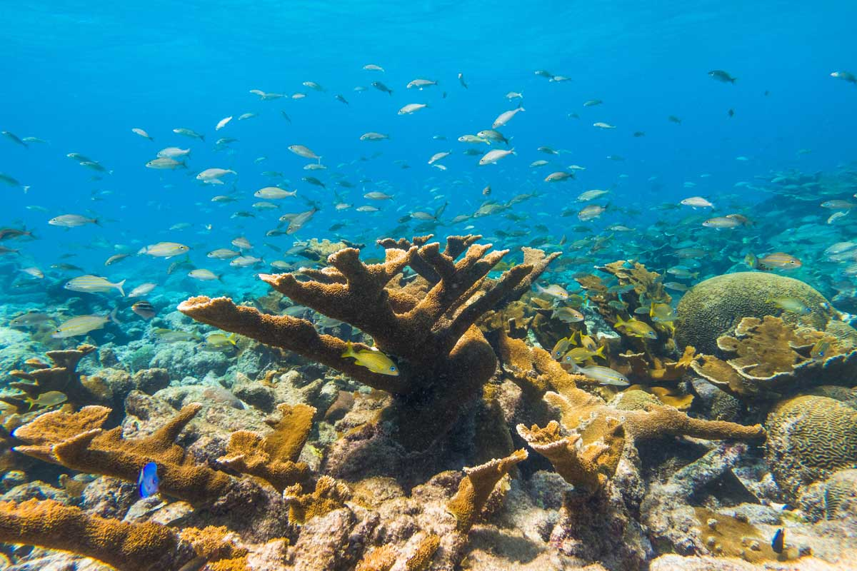 Dit zijn de mooiste plekken om te duiken op Aruba