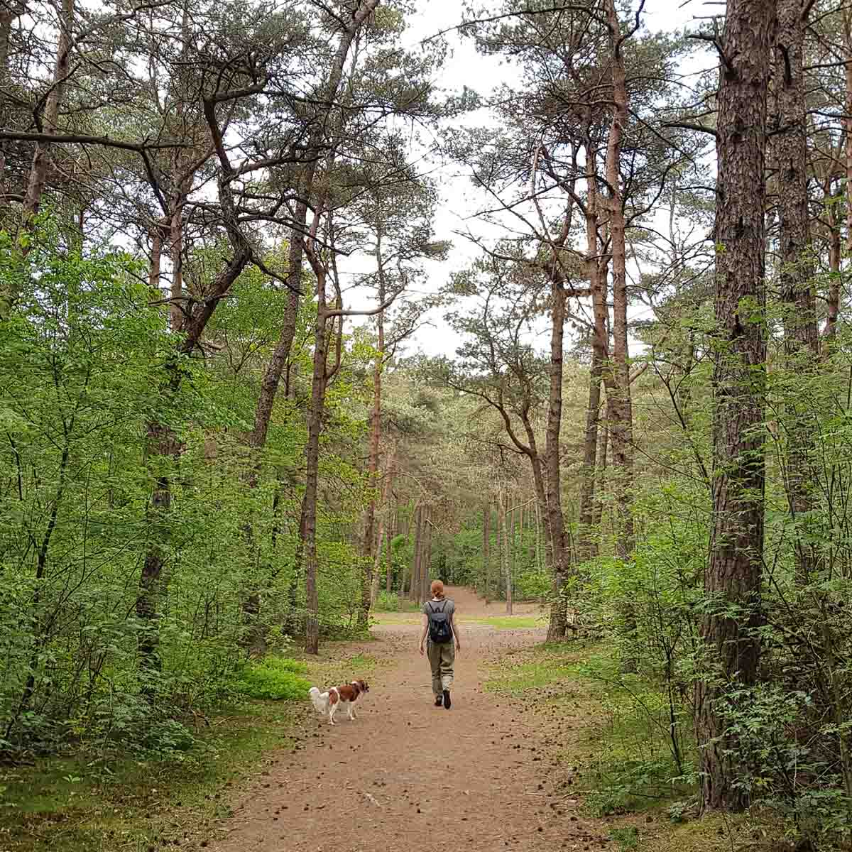 10x de mooiste Nationale Parken in Nederland, Dwingelderveld, Drents-Friese Wold