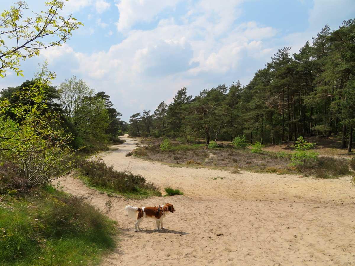 10x de mooiste Nationale Parken in Nederland, Dwingelderveld, Drents-Friese Wold