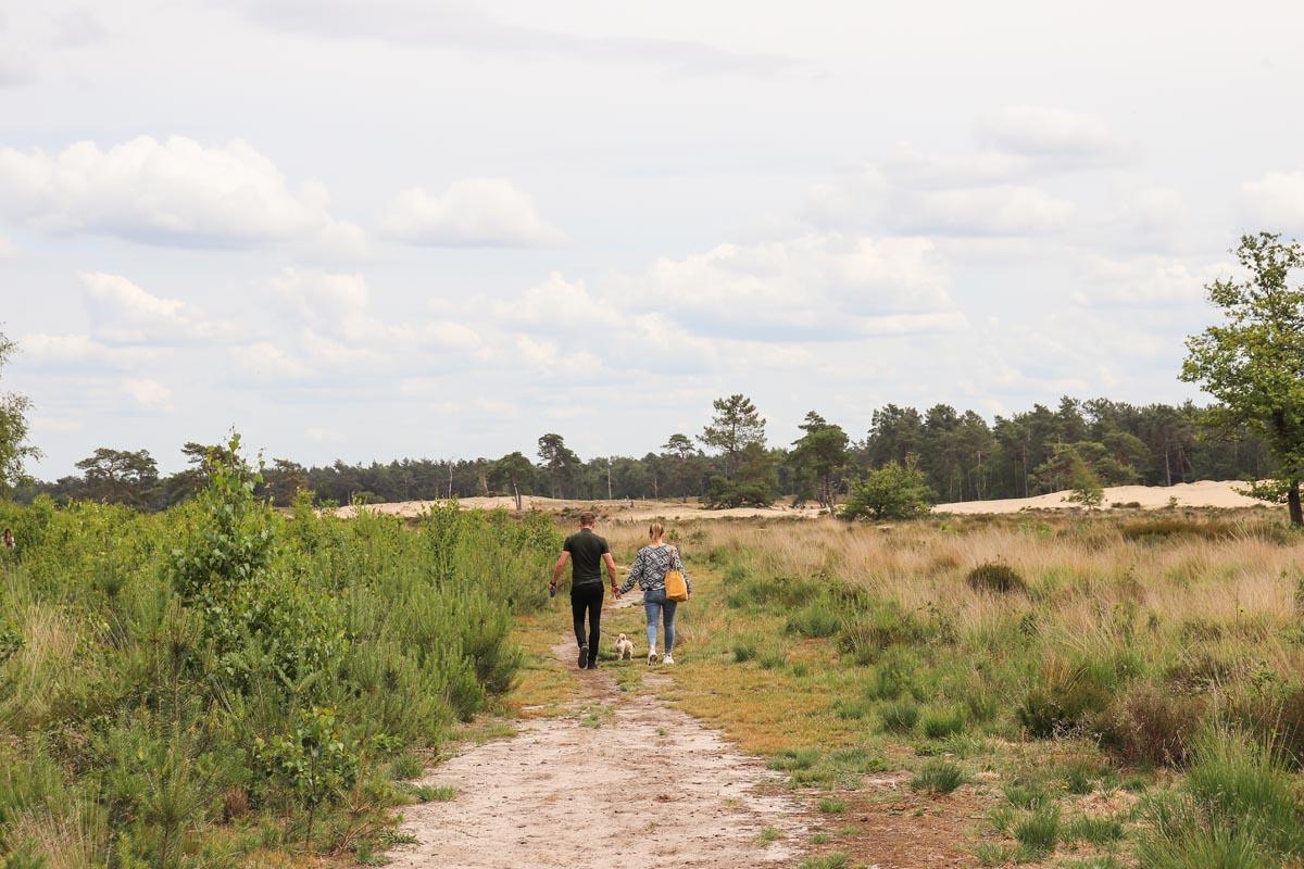 10x de mooiste Nationale Parken in Nederland, Dwingelderveld, Loonse Drunense duinen