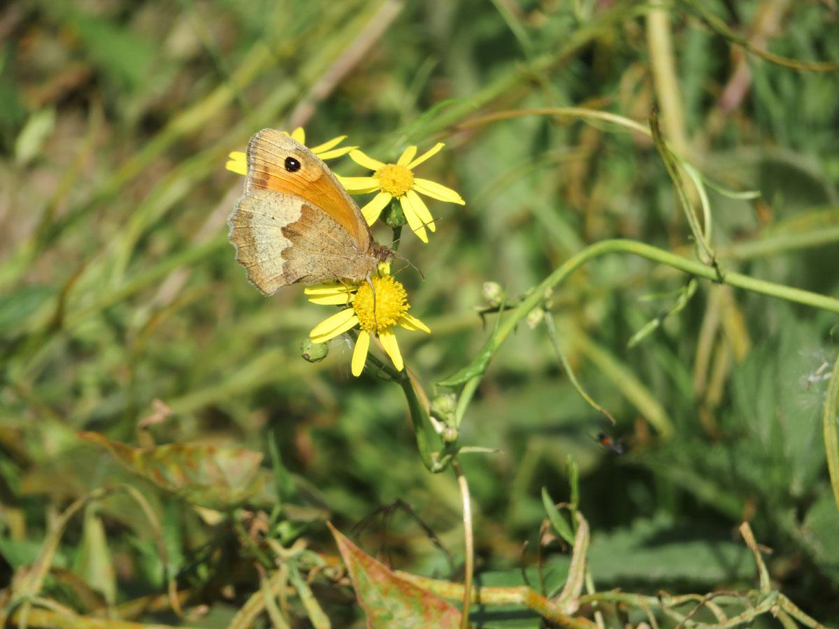 10x de mooiste Nationale Parken in Nederland, Zuid-Kennemerland vlinder