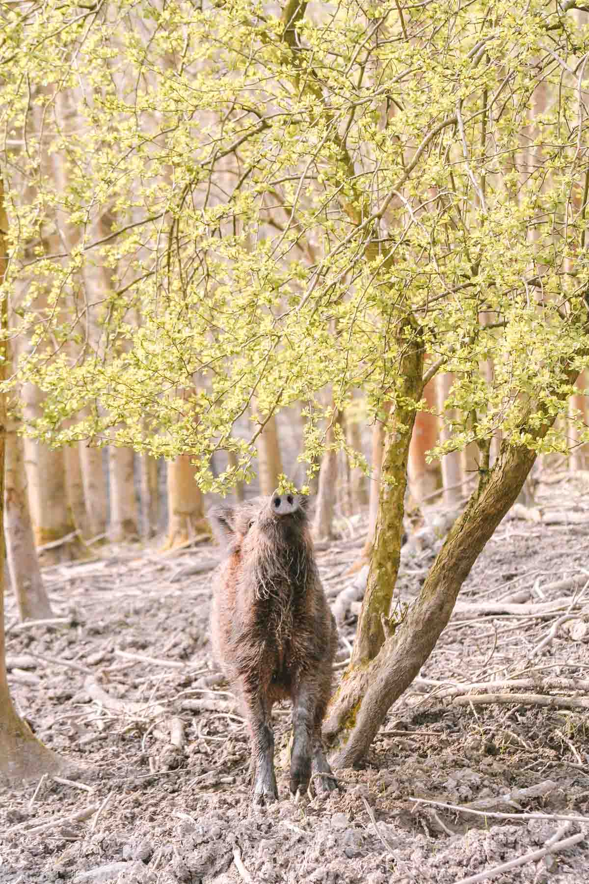 Safarigevoel in Nederland? Ga wandelen in Natuurpark Lelystad