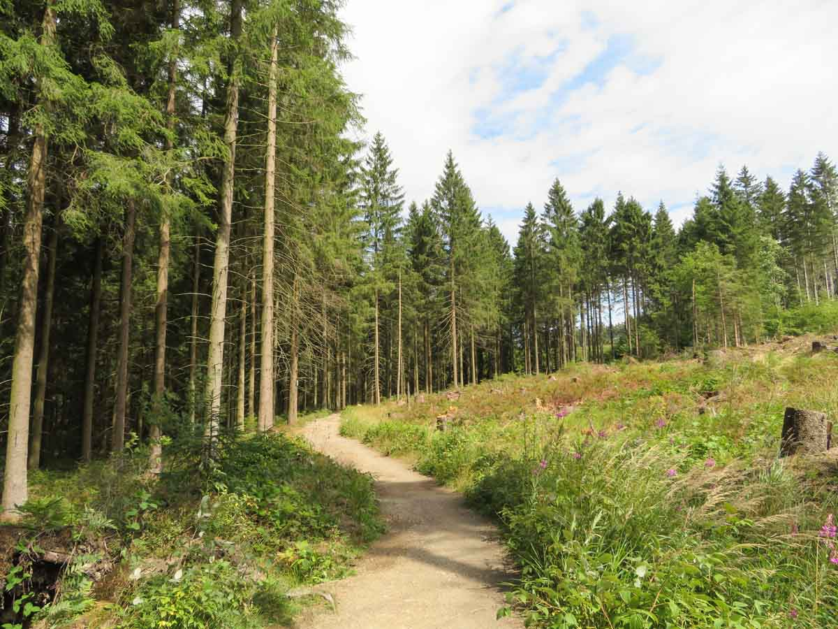 Wandelen over de Liebesbankweg in de Harz