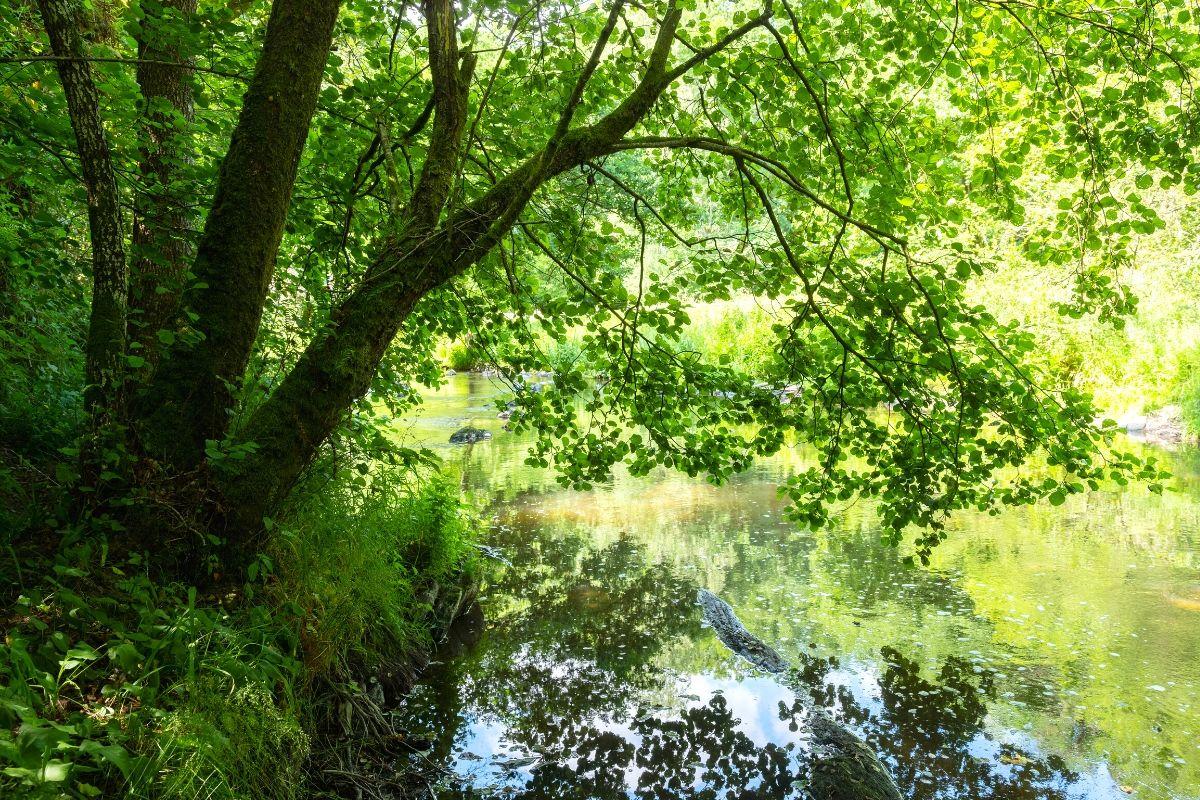 20x de mooiste bezienswaardigheden in de Belgische Ardennen, Houffalize bos