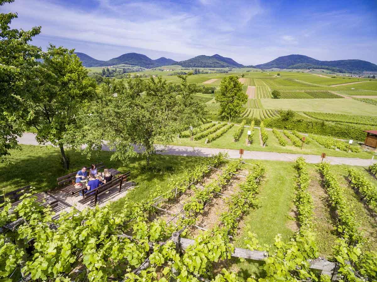 Roadtrip de Duitse wijnroute