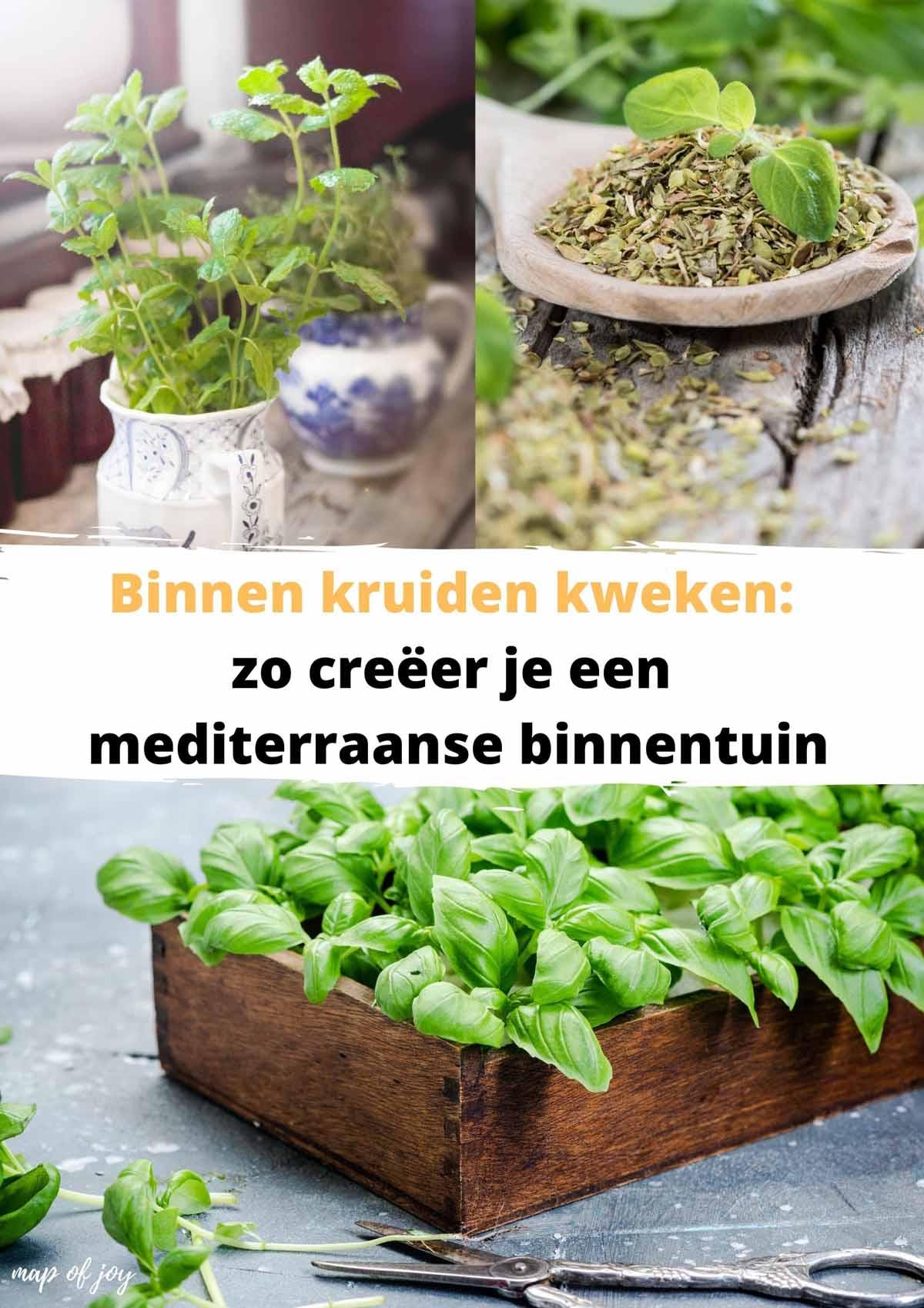 Binnen kruiden kweken: zo creëer je een mediterraanse binnentuin