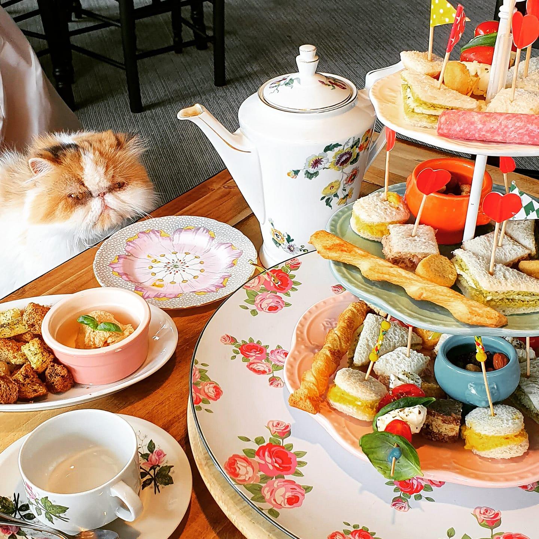 eten en drinken in Almere-Centrum, Kattencafé Coffee Cat