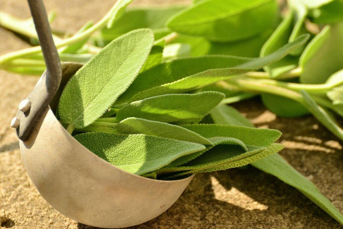 Binnen kruiden kweken: zo creëer je een mediterraanse binnentuin, salie