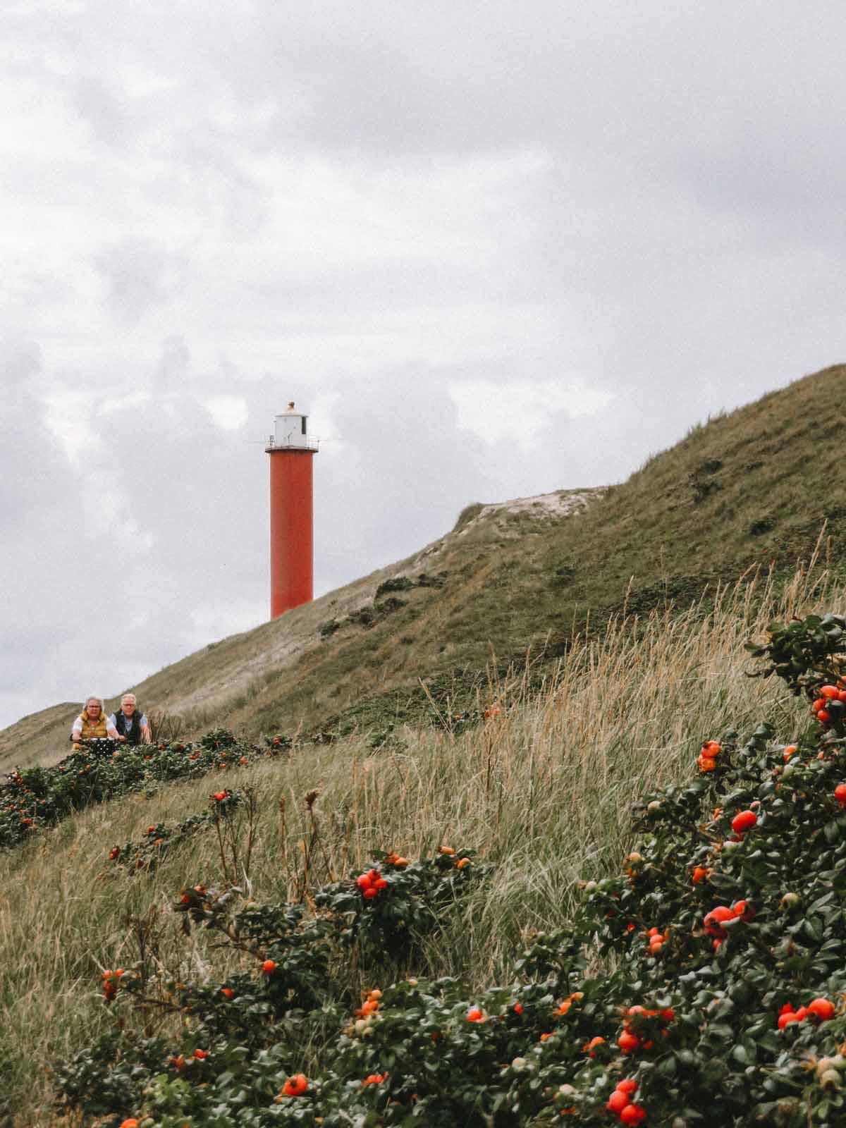 Roadtrip door de Kop van Noord-Holland: dit zijn de leukste dingen om te doen
