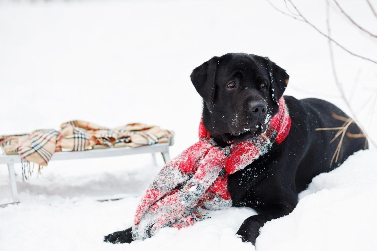 Wintersport vakantieparken: dit zijn de leukste! Hond in de sneeuw